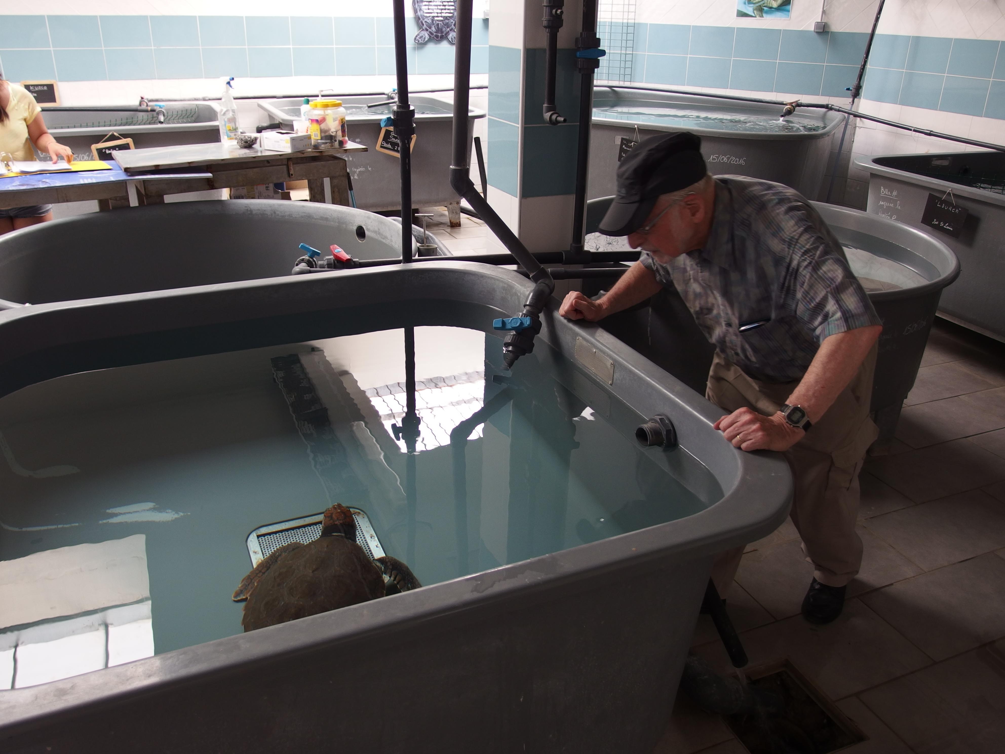 Mr Lescure examine une tortue en soins